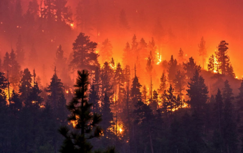 How this year has already seen some of the worst wildfires to date